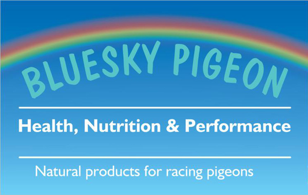 Bluesky Pigeon